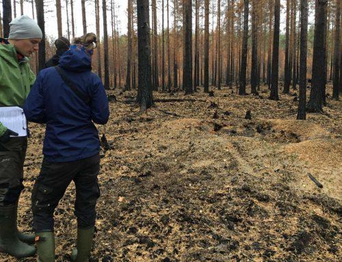 Naturvärdesbedömning i Brandfält