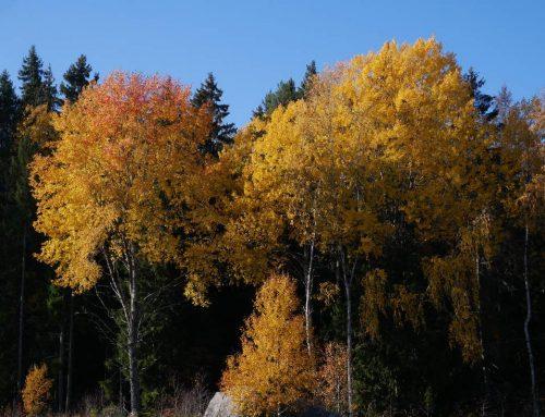 Utvärdering av Skogsstyrelsens kampanj