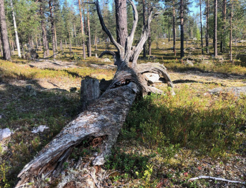 Naturvärdesbedömningar i Norrbottens inland